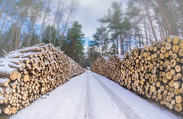 Древесина для сруба из зимнего леса